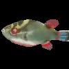 Обсуждение книг по аквариумистике - последнее сообщение от Arctodus